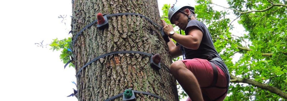 Woodland Activities